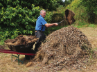 Garden expert Peter Cundall builds a leafmould mound.