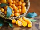 Cumquats in basket