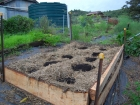 A classic permaculture companion planting combo is corns, beans and melons
