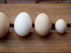 Eggs contain everything required to support a chick's development in the shell, which takes effort and resources.