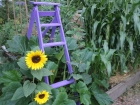 Purple ladder climbing frame