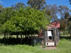 Shady chook pen