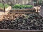 Garden Bed Preparation