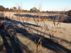 Mid Winter Orchard