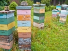 Backyard beekeeping hives