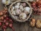 A basket of garlic surrounded by other onions