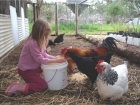 Kids and chooks make great friends