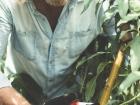 Phil Dudman pruning a peach tree