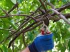 Cool-season pruning