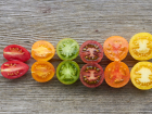Coloured tomatoes