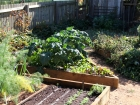 May Veg Patch