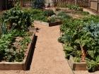 Veg Garden Summer