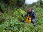Simon Websters shows us how to maintain a permaculture swale