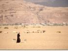 Jordan Wadi Rum herding