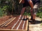Sowing carrot seed