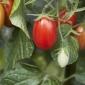'Mini Amish' heirloom tomatoes