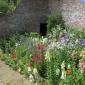 Flowers in the walled garden