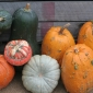 Multi coloured and shaped pumpkins