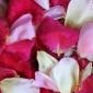 Delicous rose petals