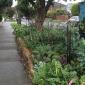Nature strip vegie garden