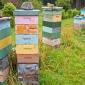 Backyard beekeeping hives