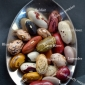 Heirloom bean graphic